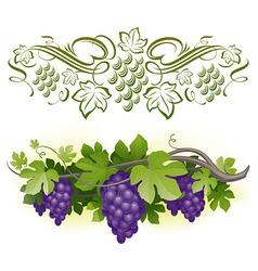Ripe grapes on vine vector
