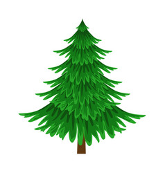 Spruce evergreen tree element a landscape vector