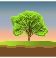 Big tree on sunset vector image