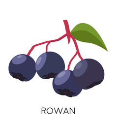 Black rowan berry flat icon isolated on white vector