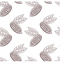 drawing seamless pattern with cocoa fruit vector image