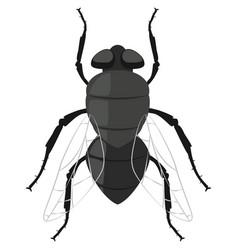 fly bug cartoon icon vector image