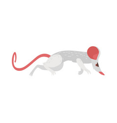 Rat - transmitter carrier of dangerous diseases vector
