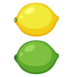 set of citrus fruit vector image