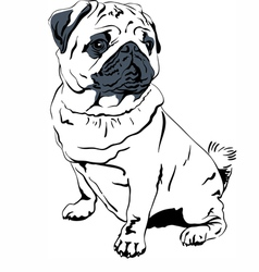 Sweet dog pug breed hand drawing vector image