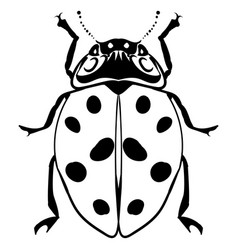 Hand drawn ink sketch ladybug isolated vector