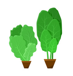 Green bunches of salad color vector