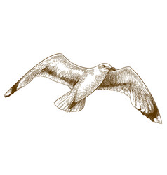 engraving drawing of flying gull vector image vector image