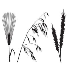 Crops vector