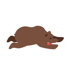 Dead bear wild animal deceased corpse of grizzly vector