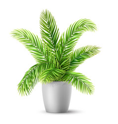 palm tree leaves in a pot vector image