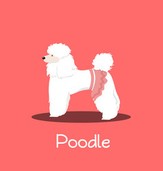 a cute poodle dog cartoon on pink background vector image