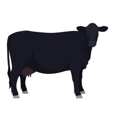 Angus cow breeds domestic cattle flat vector