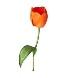 Beautiful orange tulip isolated on white vector