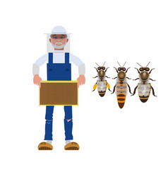 beekeeper with bees vector image