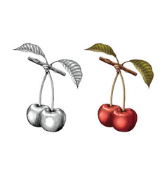 cherry hand drawing vintage engraving black and vector image