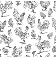 Chicken rooster chick sketch set hand drawn vector