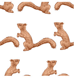 Pattern forest squirrels vector
