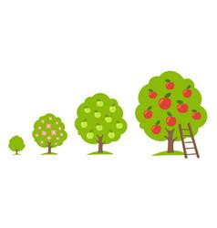 Set apple fruit tree growing process orchard vector