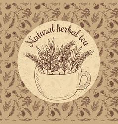 sketch card - craft herbal tea vector image