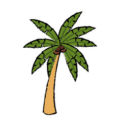 Tropical palm tree coconut plant natural vector