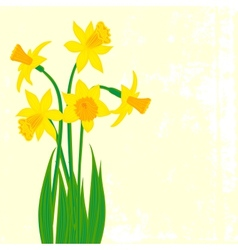 Card with five narcissus vector