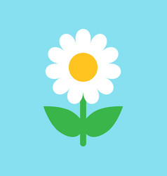 chamomile flower icon in flat style daisy on blue vector image