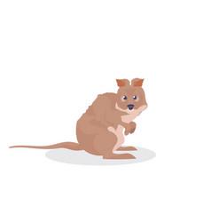 quokka icon cute cartoon wild animal symbol vector image