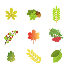 set of autumn leaves and berries vector image