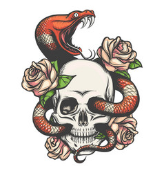 skull with snake and roses vector image
