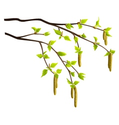 Spring birch tree branches isolated vector image