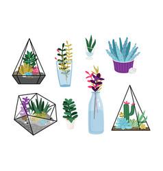 succulent plants set vector image