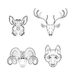 Set of animals sketches deer vector image vector image