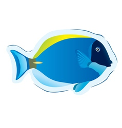 tropical fish surgeon vector image