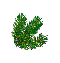 hand drawn triple fir tree twig branch spruce vector image