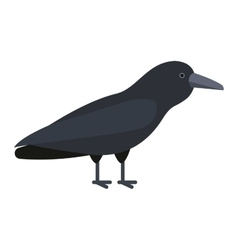 Carrion crow raven vector image