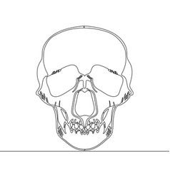 continuous one line drawn skull x-ray vector image