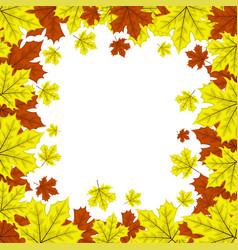 frame maple leaves vector image