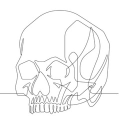 human skull one continuous line graphic ill vector image