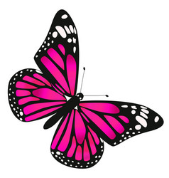 one butterfly is dark pink in color graphics vector image
