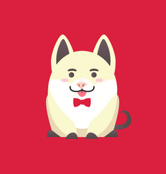Sitting white pig with bow isolated on red vector