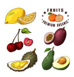 hand drawn of lemon cherry vector image