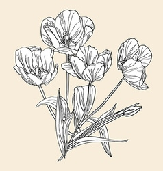 hand drawn decorative tulips vector image vector image