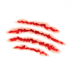 Animal claws torn vector