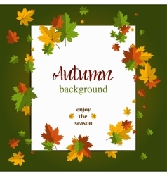 Seasonal background with maple leaves Copy space vector image