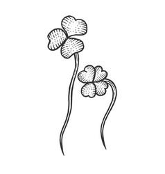 Clover trefoil plant sketch engraving vector