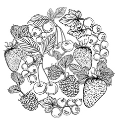 collection of berries and fruits vector image