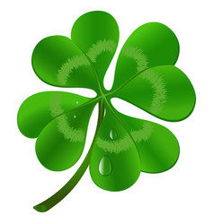 four leaf clover - st patricks day symbol vector image
