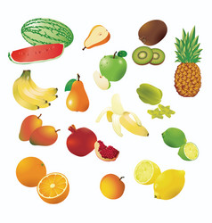 Fruit clipart templates vector