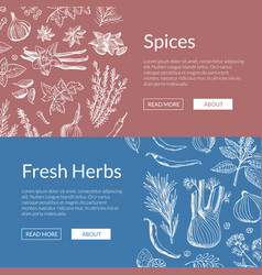 hand drawn herbs and spices banners vector image